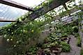 fern-house.jpg