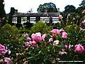 Plas_Newydd_Llangollen_04-08-2009_17-45-42.JPG