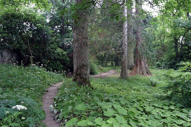 big woods nature trail